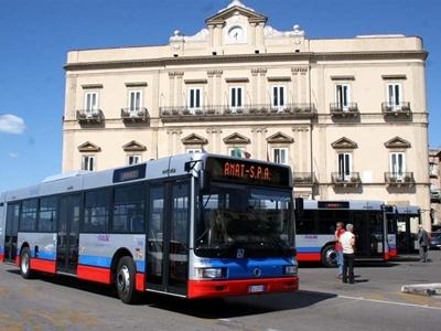 amat bus